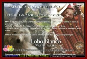 Lobo blanco en Valencia